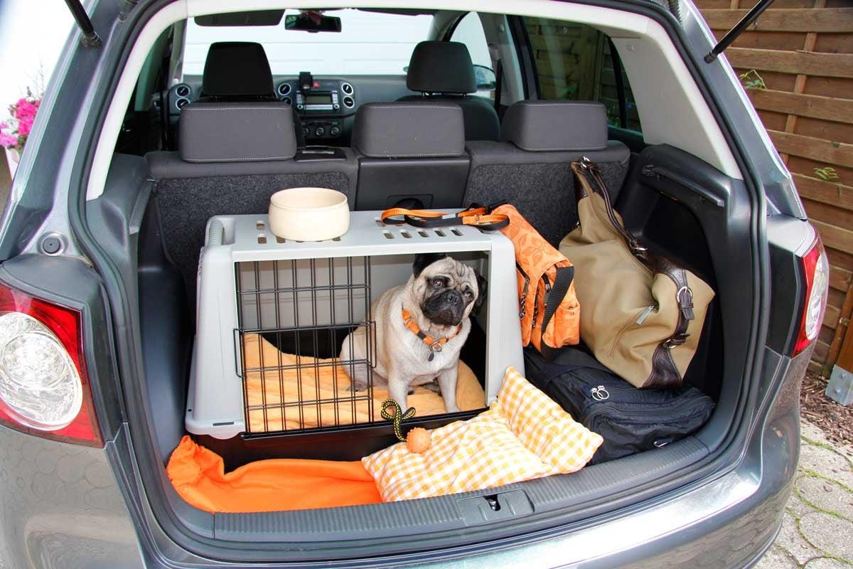 trasportin-perro-colocarlo-coche