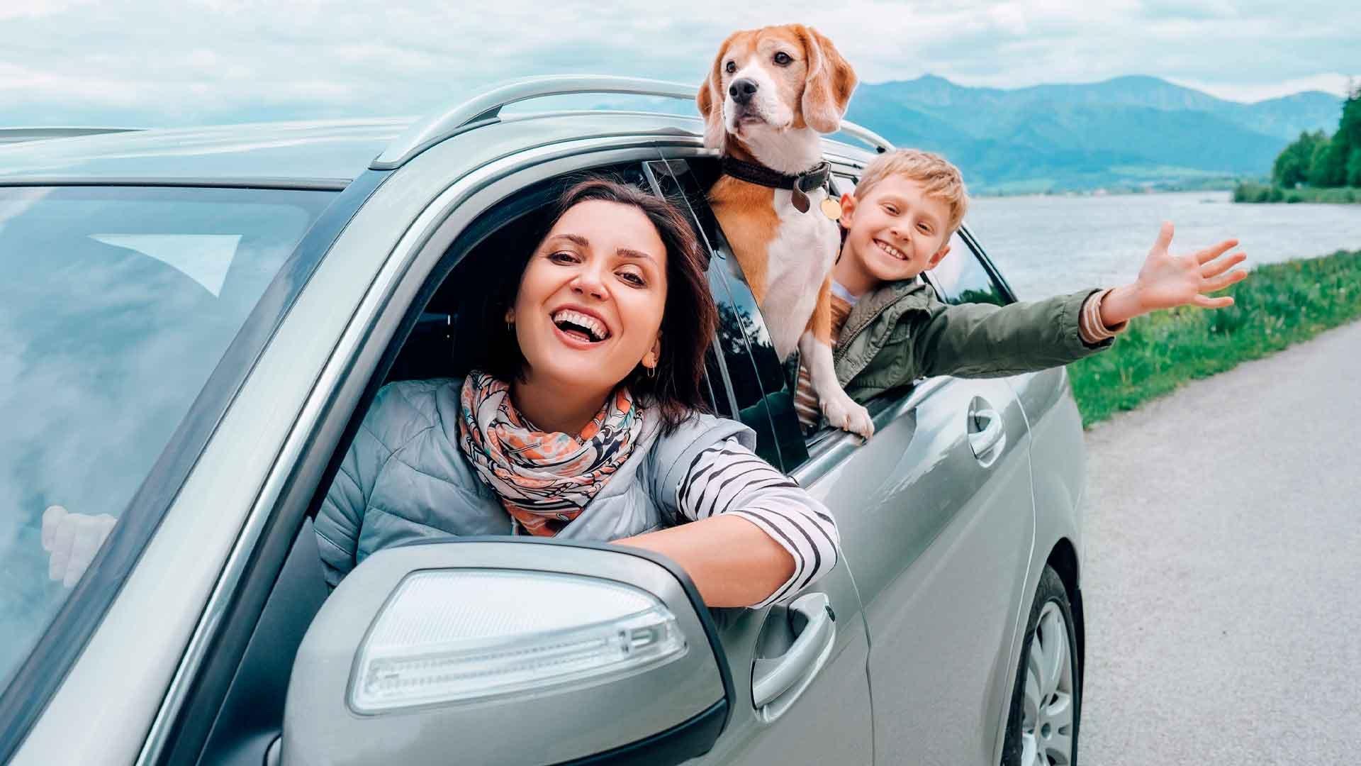 viajar-con-niños-y-perros-accesorios-para-el-coche